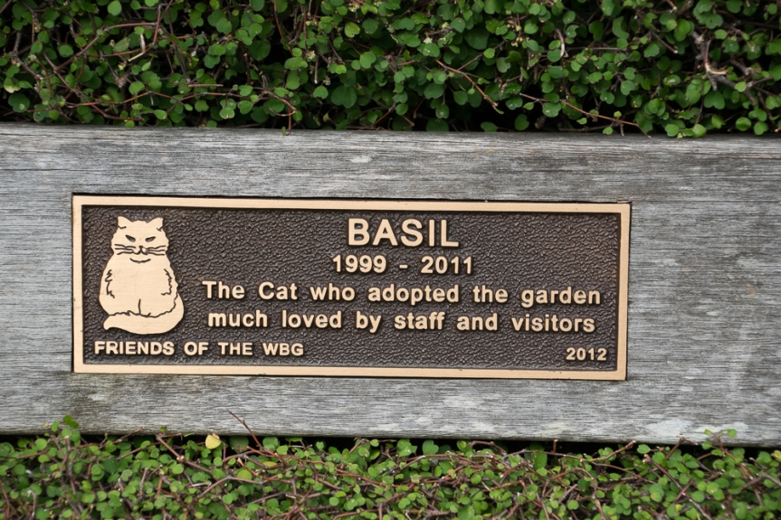 cat bench sign