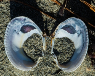 shell pair