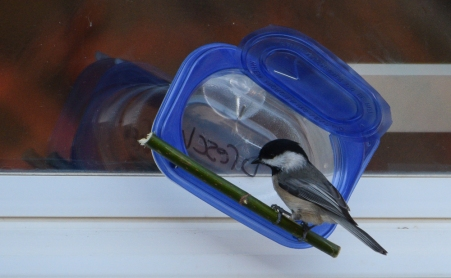 chickadee-feeder-1