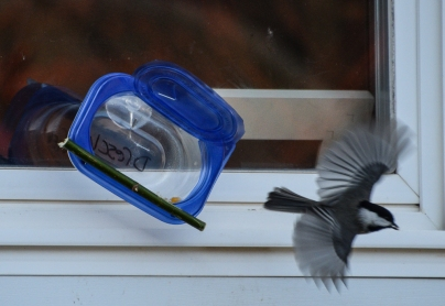 chickadee-feeder-2