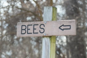 bees sign